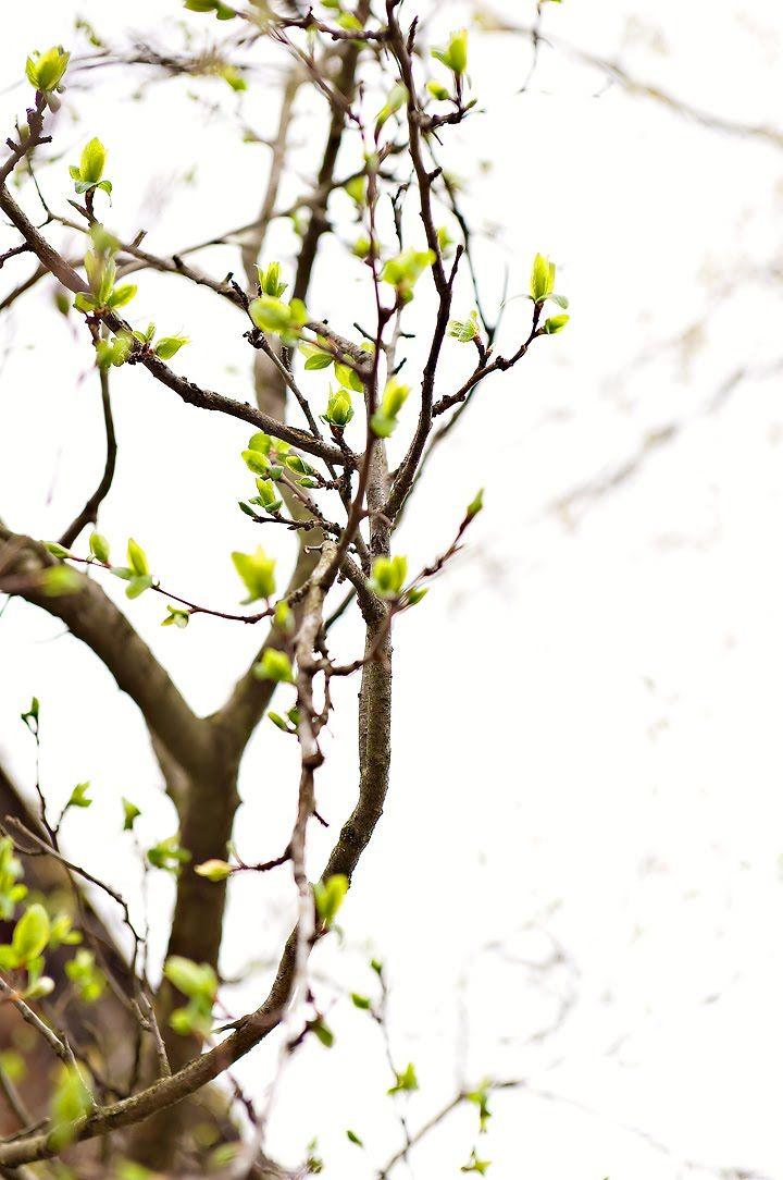 Day 7 - the tree outside our bedroom starting to sprout green leaves