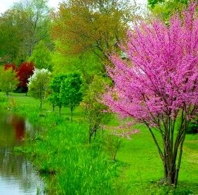 landscaping+small+trees | Trees for any landscape design, flowering trees,Beautiful peach trees ...