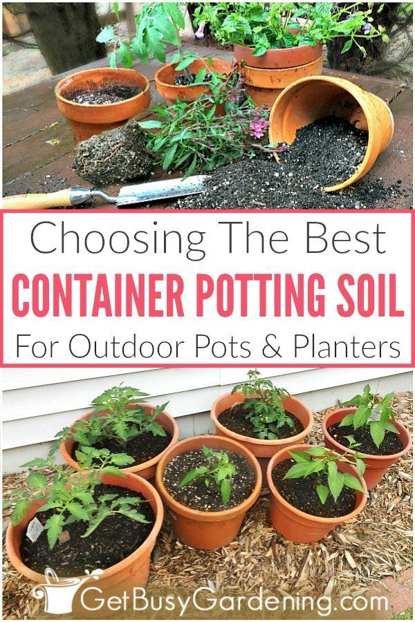 Choosing The Best Potting Soil Mix For Container Gardening With