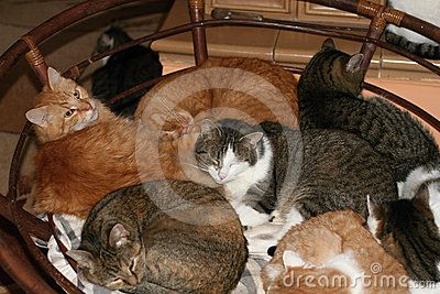 Several cats curled up and sleeping together in a wicker chair.
