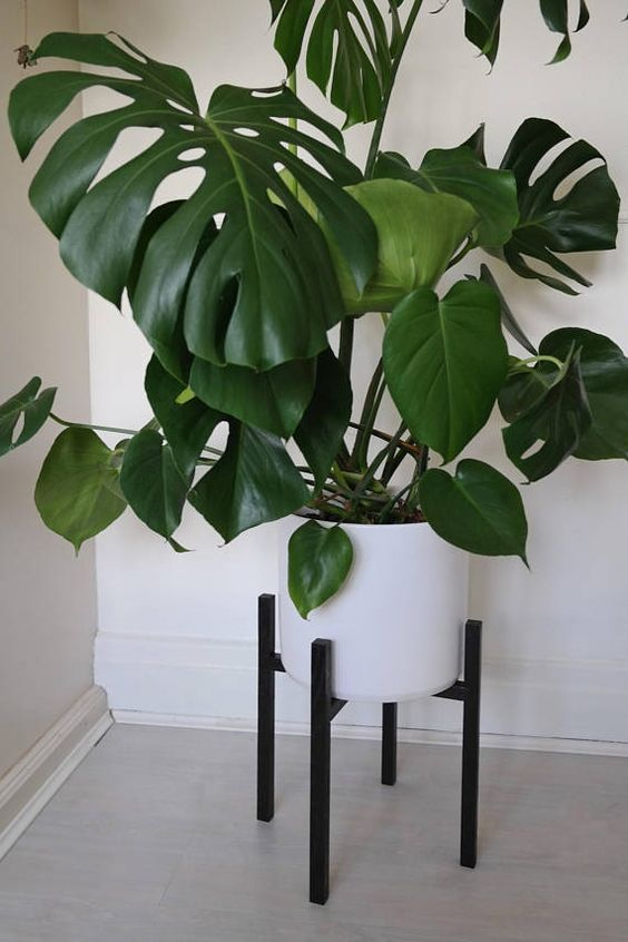 Plant stand – Black Stained Solid Oak