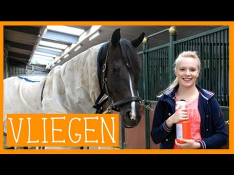 Vliegenspray maken | PaardenpraatTV - YouTube