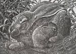 """""""Straw Baby"""" is an original etching by Nicholas Wilson.  Edition size of 40.  Represented by Island Arts International and sold at Rose City Framemakers, Madison, NJ."""