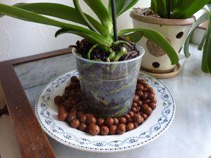 Coupe remplie de billes d'argile sous un phalaenopsis en pot