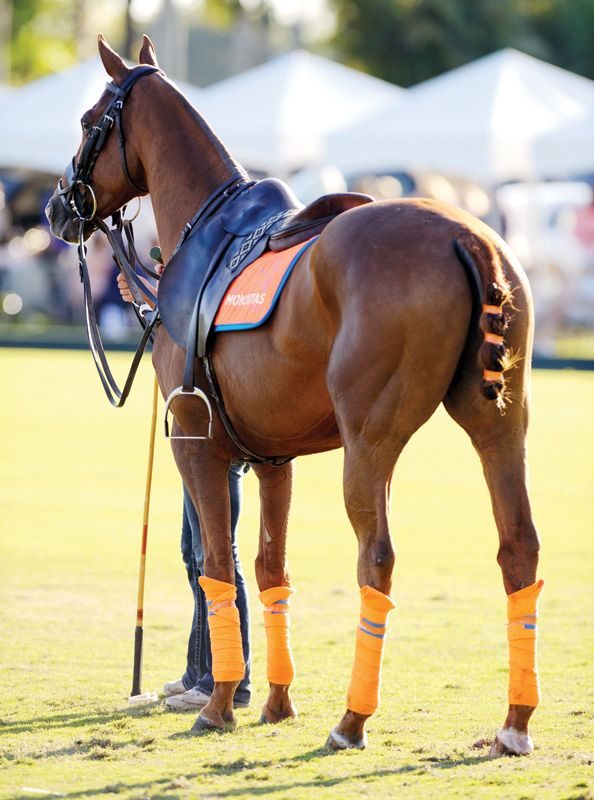 International Polo Club Palm Beach - Polo Rules and Regulations