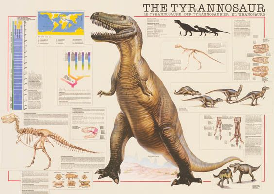 Tyrannosaurus Rex Facts and Figures T-Rex Dinosaur Education Poster 26x38