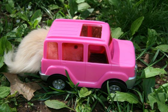 The Hamster reviews a new SVU. With more rear cargo space than ever before, it's as reliable as it is rugged…Right, nothing says 'rugged' like a Pepto-Bismol paint job.