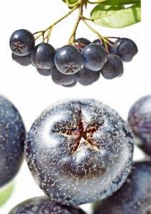 aronia fructe 2