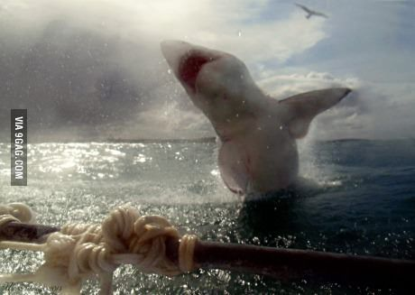 Great white shark breaching off the coast of South Africa. OMFG.