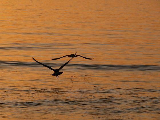 Sicilia - Volare come un gabbiano - di alexconti58