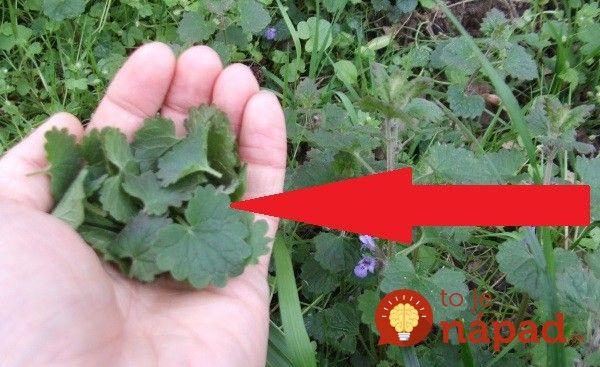 Žiadna burina, ale rastlinka, s ktorou by ste rozhodne mali zoznámiť, môže vám veľmi pomôcť!