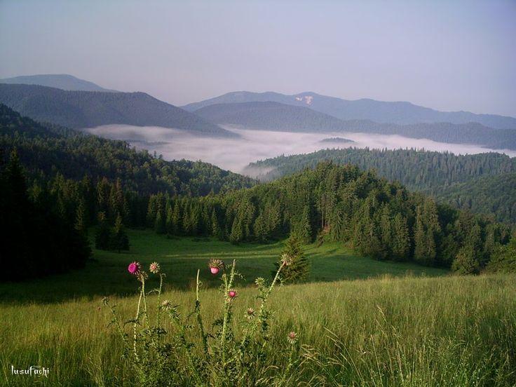 Romania -- gorgeous!  Padis, Crisana