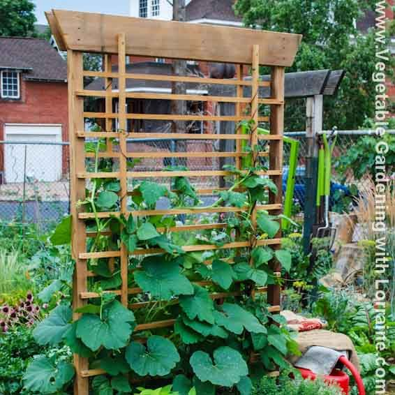 Vertical Gardening Trellis Ideas Part - 16: Vegetable Garden Trellis Ideas | From Beginning To Master Gardener