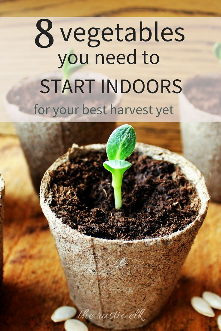 Get a head start on your garden this season. Here are 8 vegetables you need to start indoors, how to start them and transplant them for your best harvest ever. #gardening
