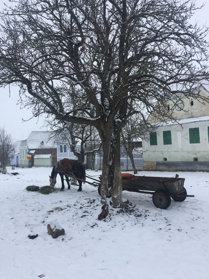 a horse on a carriage eating on the main road in a remote village in Transylvania