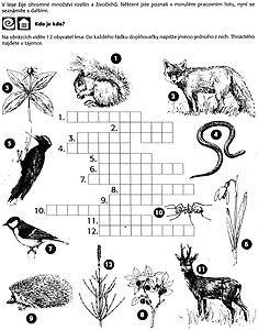 ZŠ Holubov 2003, ekologická výchova - křížovka, ilustrace