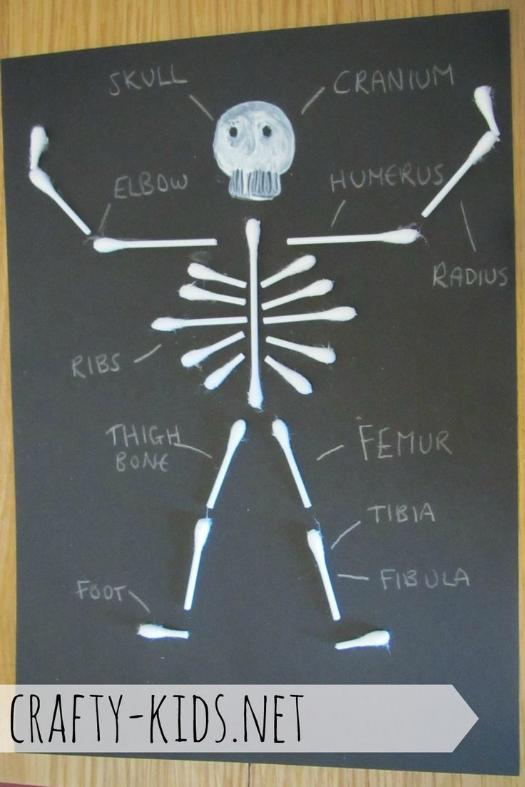 Crafty Kids. Silly skeleton ~ an education craft to learn about the human body