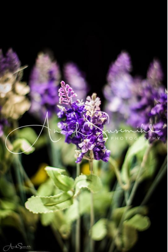 17 Best Ideas About Lavendel Bilder On Pinterest | Lavendel ... Positive Wirkung Lavendel Pflege