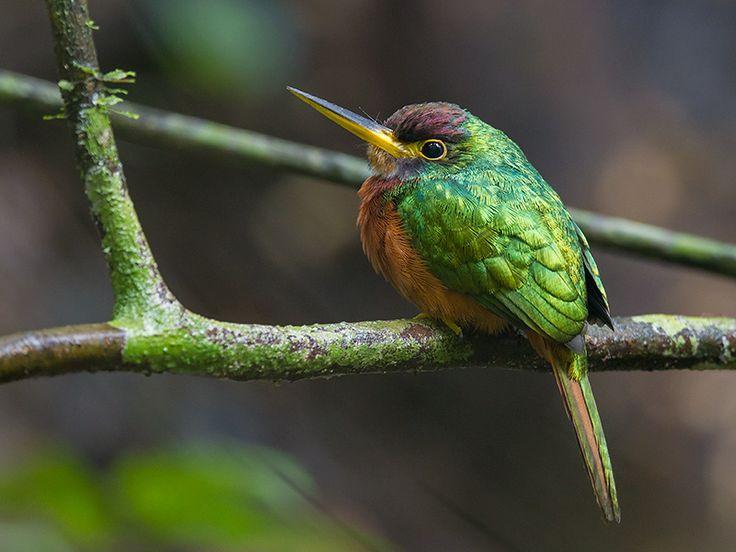 I Love Birds Image By Celeste Chaname Bird Feathers Birds Bird