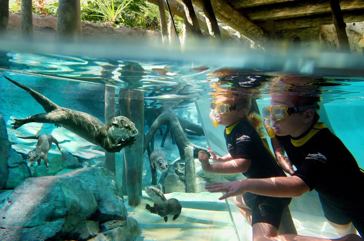 Freshwater Oasis features swimming and wading adventures and face-to-face encounters with playful otters.