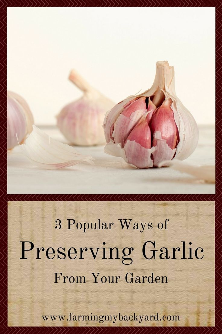 Preserving garlic is one of the easiest ways to learn how