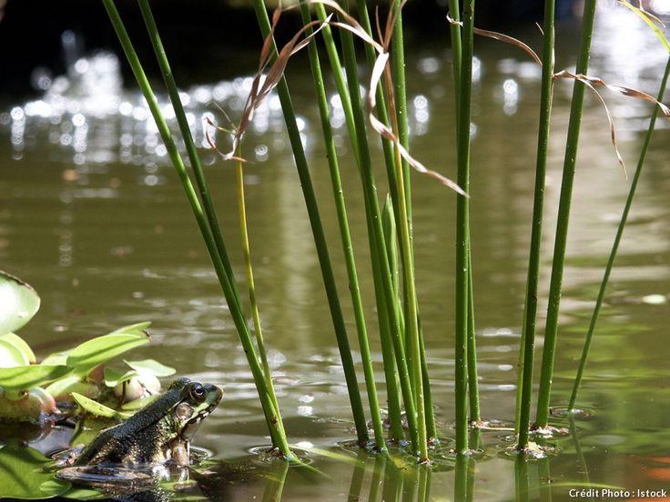 Les 44 meilleures images propos de les animaux du jardin for A propos du jardin