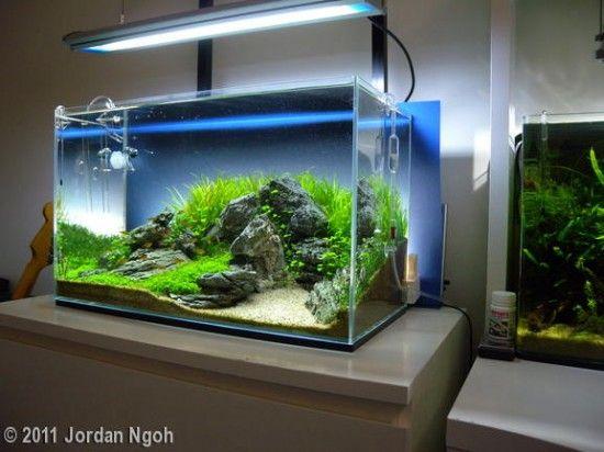 20 best aquarium set up ideas images on pinterest. Black Bedroom Furniture Sets. Home Design Ideas