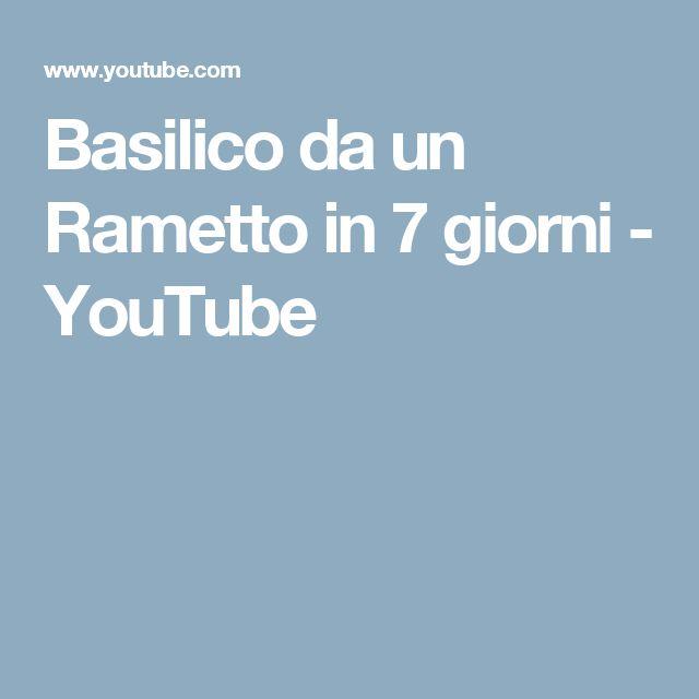 Basilico da un Rametto in 7 giorni - YouTube