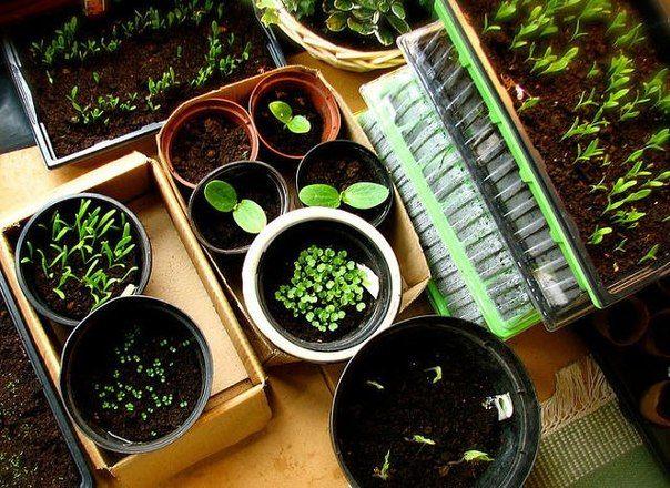 Semănăm seminţele în... apă clocotită! - Perfect Ask