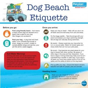 Keep it classy at the Dog Beach this summer, Australia. Be sure to check out our Water Safety Tips for advice on bringing your dog to the beach, the lake, or the pool.