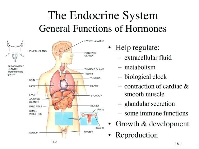 Endocrine System Label Endocrine System Label Diagram The Lung