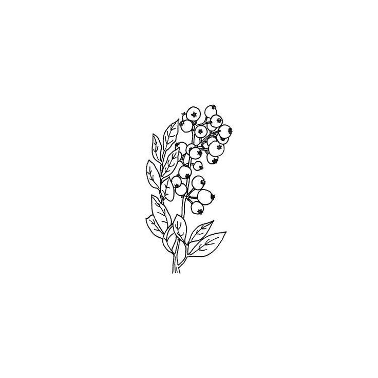 Cranberry branch.  I'm so in love with cranberries in my granola (delicious), that I decided to make a little drawing about it! ❤ #illustration #sketch #drawing #fineliner #botanicalillustration #botanicaldrawing #botanicaldrawing #cranberrybranch #cranberries #botanical #allthingsbotanical #shareyoursketch #granola #delicious