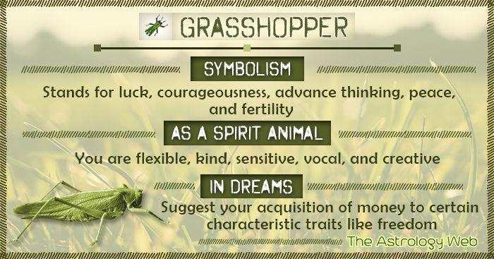 Grasshopper Symbolism Spirit Animal Dream Spirit Animal Totem Animal Spirit Guides Animal Totem Spirit Guides