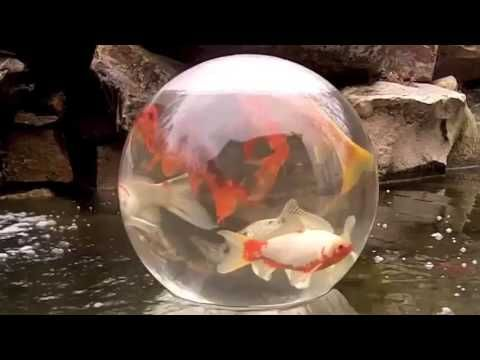 81 Best Images About Koi Pond Man Made And Water Garden On Pinterest Above Ground Pond The