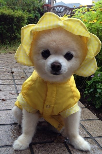 His favorite piece of clothing is his yellow raincoat.