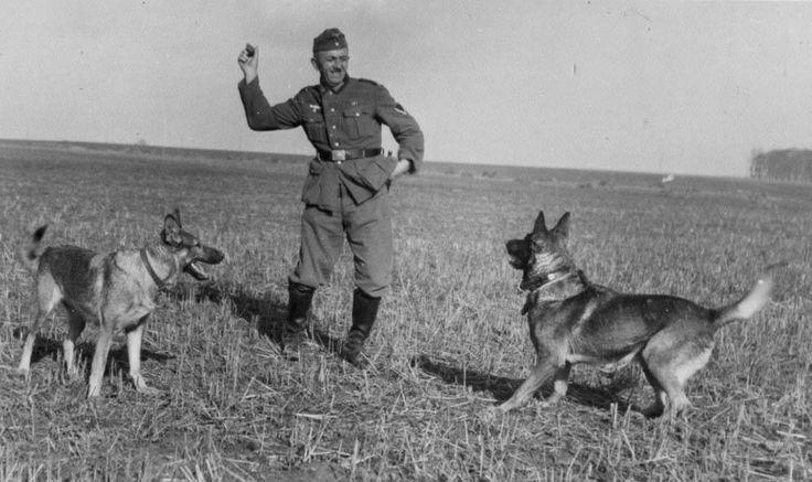 Немецкие овчарки