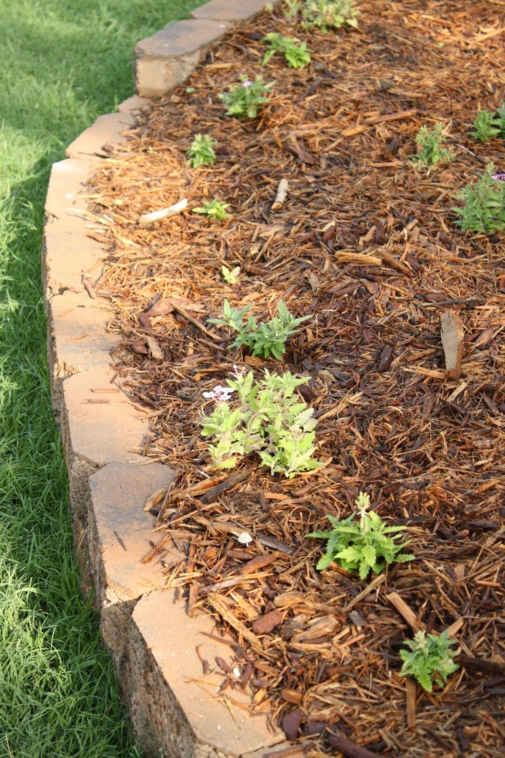 Newspaper under mulch as weed blocker - 3 to 4 sheets thick