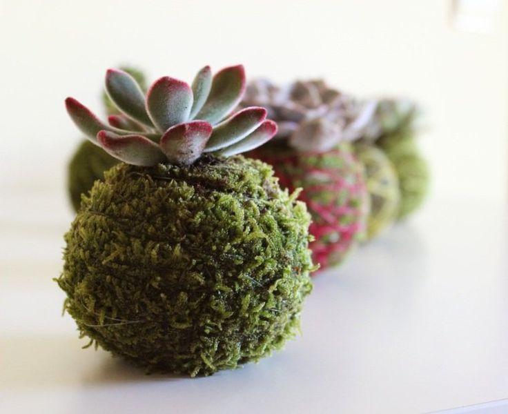 plantes grasses et composition florale avec succulents