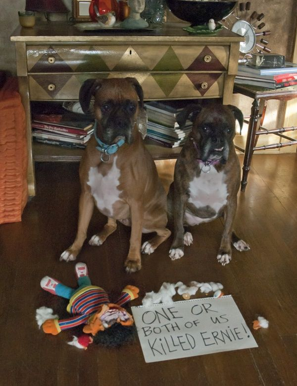 It's a massacre!!! #funny #dogs