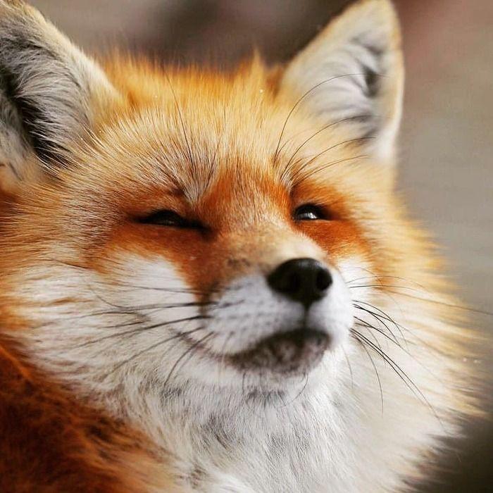Открытка днем, картинки смешной лис