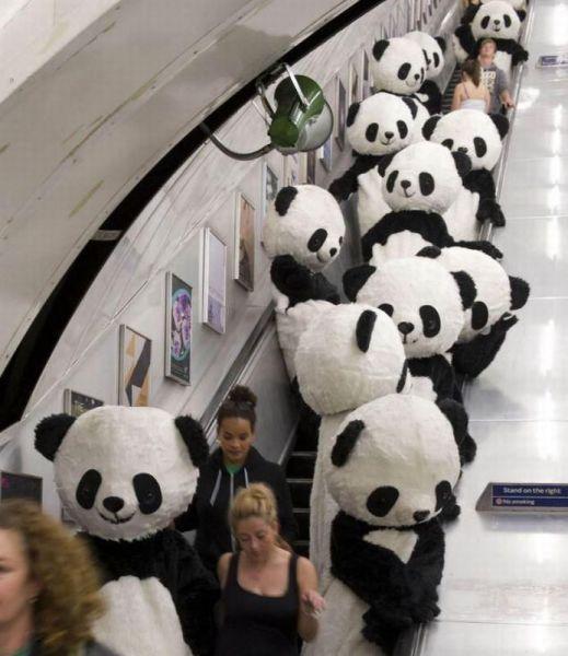 people in panda suits on an escalator in public yeeeee