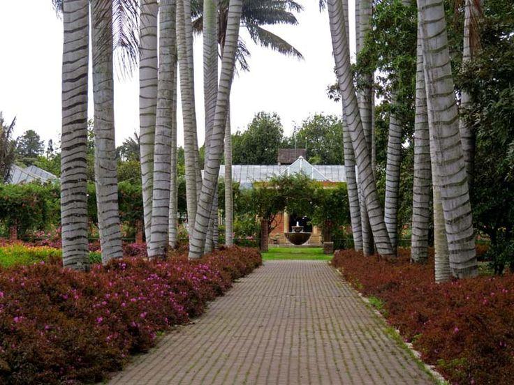 1. Jardín Botánico: Para llegar al centro de la rosaleda hay un camino en linea recta enmarcado por palmeras.