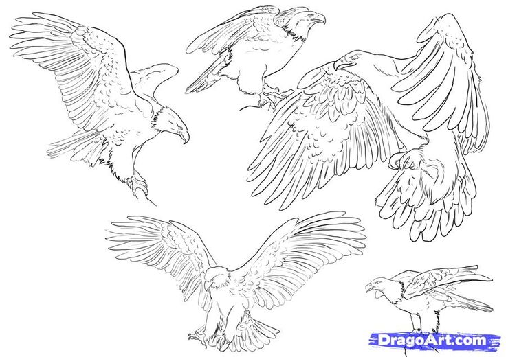 346 best EAGLE- DRAWING AND PAINTING images on Pinterest ...