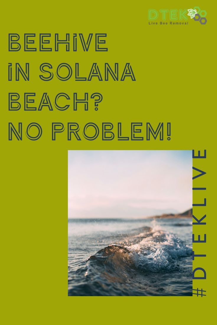 Beehive In Solana Beach No Problem Do You Need Bee Removal In Solana Beach Look No Further Than The Bee Control Pros At D Tek Live Bee Bee Removal Solana Beach Bee