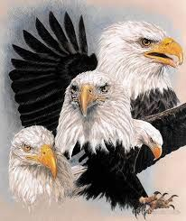 Image result for Native American eagles birds pics