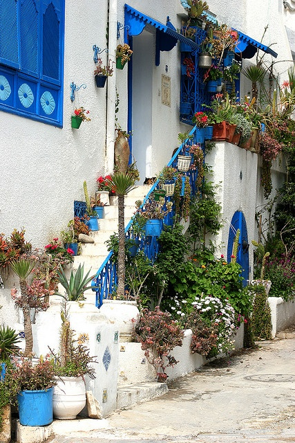 Beautifully arranged entrance to the blue painted door and windows of a house in Sidi Bou Said, Tunisia, North Africa