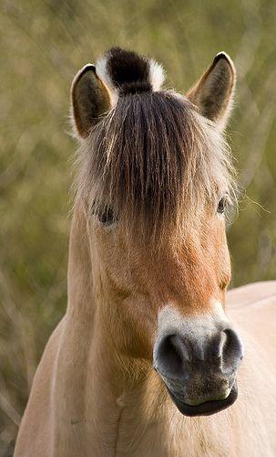 Horse Portrait - http://www.1pic4u.com/blog/2014/10/02/horse-portrait-2/