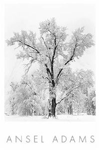 Oak Tree, Snowstorm by Ansel Adams