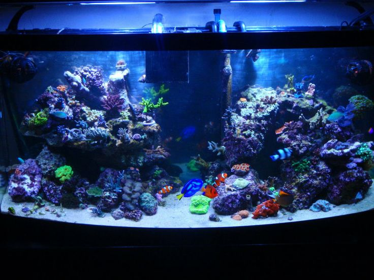 Top Reef Tank Aquascapes New Pic Of My 72 Bowfront New