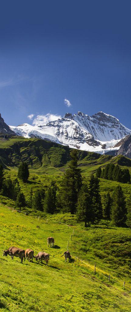 Alpes, Suiza                                                                                                                                                                                 Más